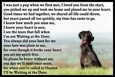 Black-Labrador-Spaniel-Crossbreed-Dog-Fridge-Magnet-Memorial.jpg