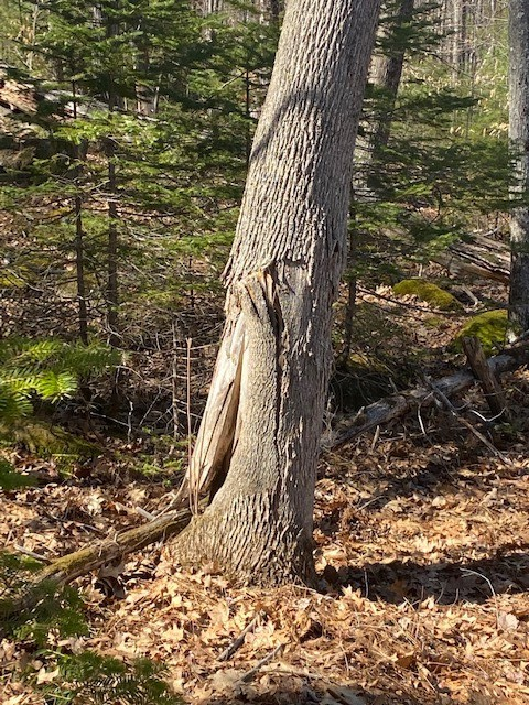 Tree 1.1.jpg